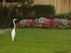 Bird in mystery author Nancy J. Cohen's yard