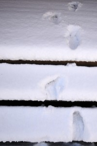 Jim Snowprints